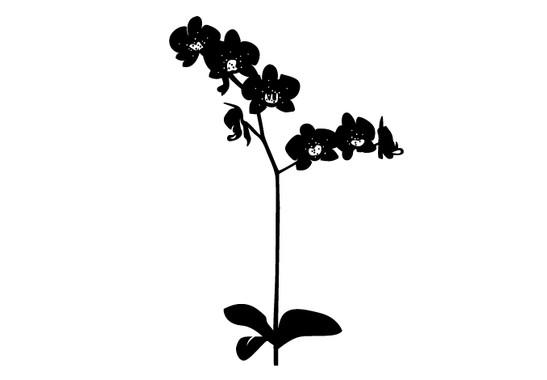 schwarz/weiss Ansicht - Wandtattoo Orchidee