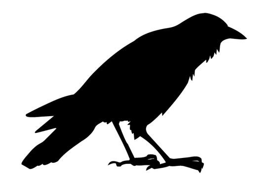 schwarz/weiss Ansicht - Wandtattoo Krähe