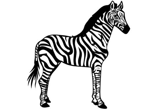 schwarz/weiss Ansicht - Wandtattoo Zebra