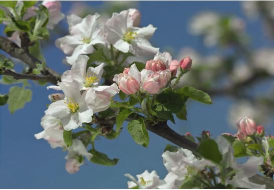 Fototapete Primavera - Bild 1