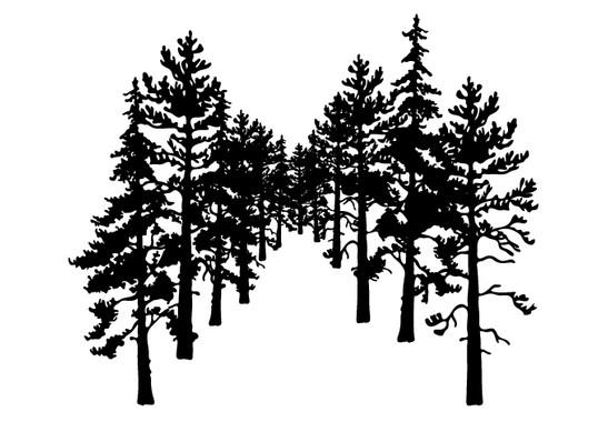 schwarz/weiss Ansicht - Wandtattoo Wald