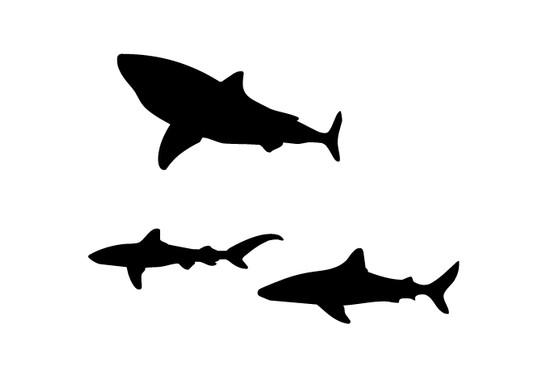 schwarz/weiss Ansicht - Wandtattoo Sharks in the dark
