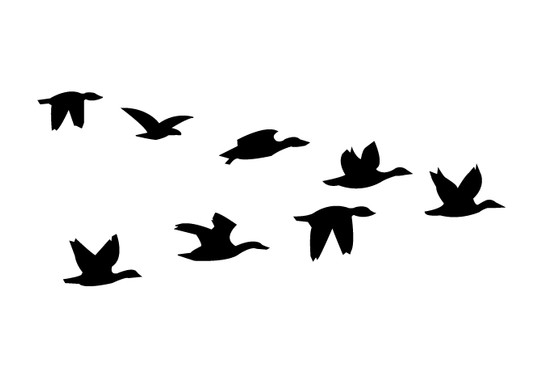 schwarz/weiss Ansicht - Wandtattoo Vögel im V-Flug
