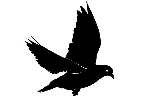 schwarz/weiss Ansicht - Wandtattoo Taube