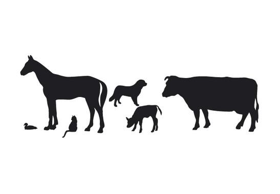 schwarz/weiss Ansicht - Wandtattoo Bauernhoftiere