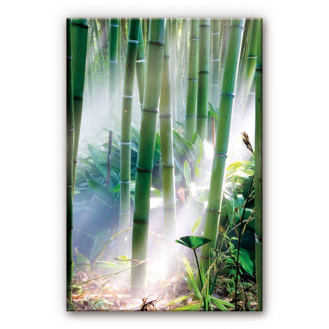 Acrylglasbild Bamboo Forest